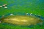 Mit dem Helikopter über das Okavango Delta! – Warum du dir dieses Abenteuer auf jeden Fall gönnen solltest!