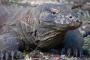 Komodo Dragons – Auf der Suche nach den letzten größten Waranen unserer Erde