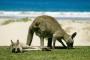 Murramarang National Park – Merry Beach – Kängurus, Possums & ihre Freunde zum Sattsehen!