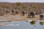 30 Gründe, warum der Etosha Nationalpark tierischen Spaß macht!