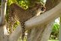 Namibia's Geparden Farmen – Wildkatzen hautnah – Otjitotongwe Cheetah Park