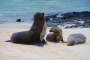 Galapagos Inseln: San Cristóbal – Highlights Teil 1: Riesenschildkröten, Cerro Brujo & der Süden