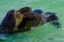 Galapagos Inseln: Floreana – Wo paarende Schildkröten das Meer zum Brodeln bringen!