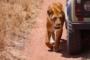 30 Tierische Gründe für den Besuch des Serengeti Nationalparks – Tierparadies Afrika!