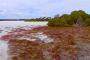 Coorong National Park – Sanddünen, eine unendlich lange Lagune & jede Menge Salzseen!