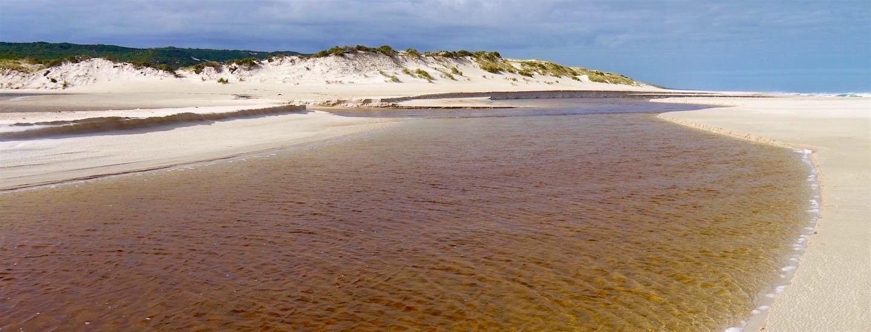 Überwältigende Yeagarup Sanddünen & Gigantische Karri Wälder – Beach & Forest 4WD Adventure!