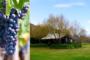 Margret River Weintour – Genuss, Spaß & das Besondere: Bushtucker Food