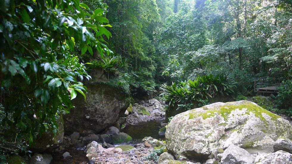 Minnamurra Rainforest - Der ursprünglichste und schönste Regenwald südlich von Sydney - New South Wales