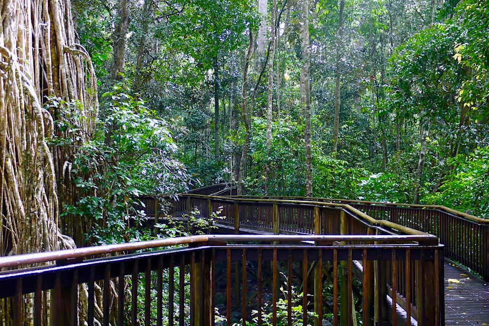 Boardwalk - Curtain Fig Tree - Atherton Tablelands & Yungaburra National Park - Queensland