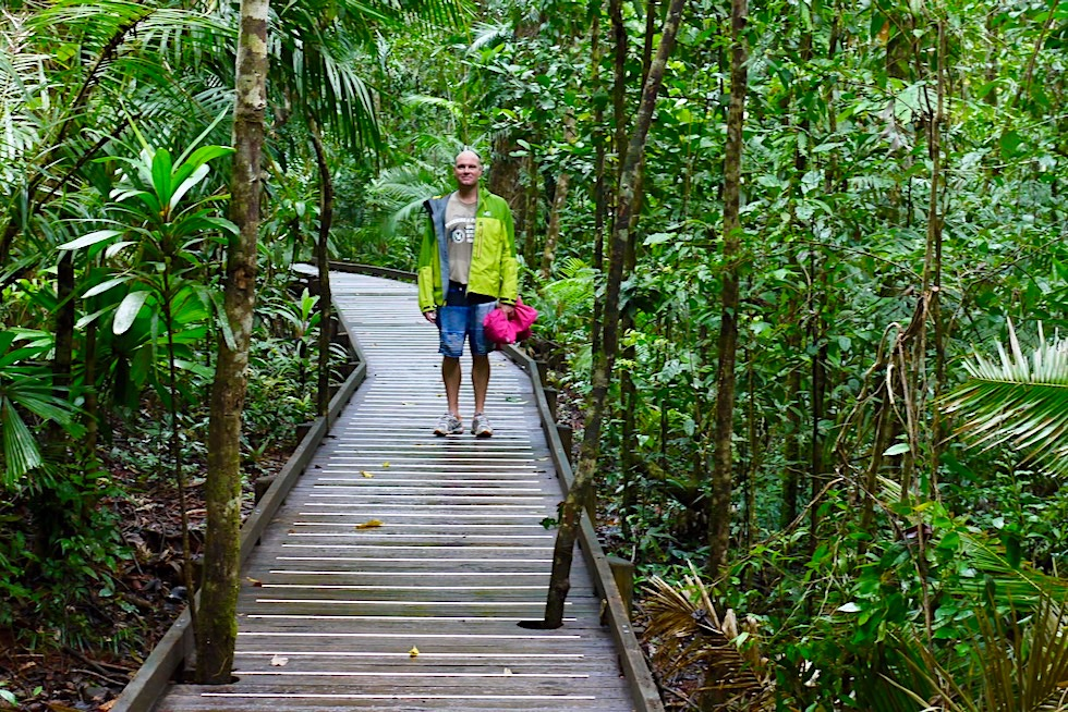 Daintree Rainforest & Cape Tribulatuion - Jindalba Boardwalk: kurzer Rundweg durch den Regenwald - Queensland