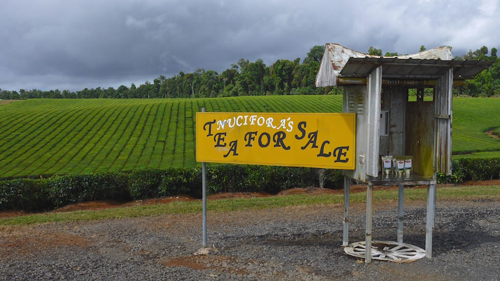 Tea Plantage North Queensland