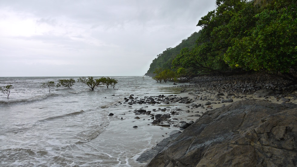 Daintree National Park & Cape Tribulation an einem Regentag - Queensland