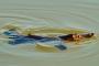 Schnabeltiere & Tarzali Lakes – Ein tierisches Highlight der Atherton Tablelands!