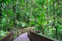 Daintree Rainforest & Cape Tribulation – Wo sich Regenwald & Great Barrier Reef treffen