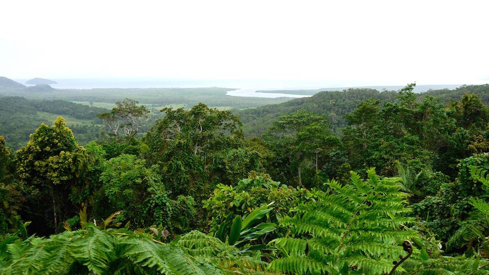 Daintree Rainforest & National Park - Ausblick über den Regenwald bis zum Meer - Queensland