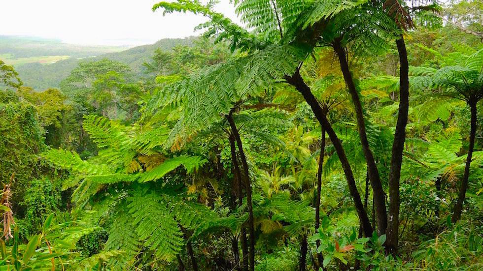 Daintree National Park - Aussichtsplattform mit grandiosem Weitblick über den Regenwald - Queensland