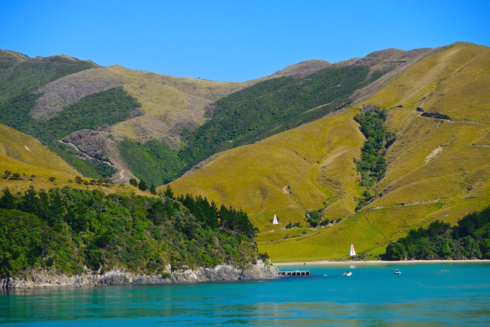 Queen Charlotte Sound by Ferry New Zealand