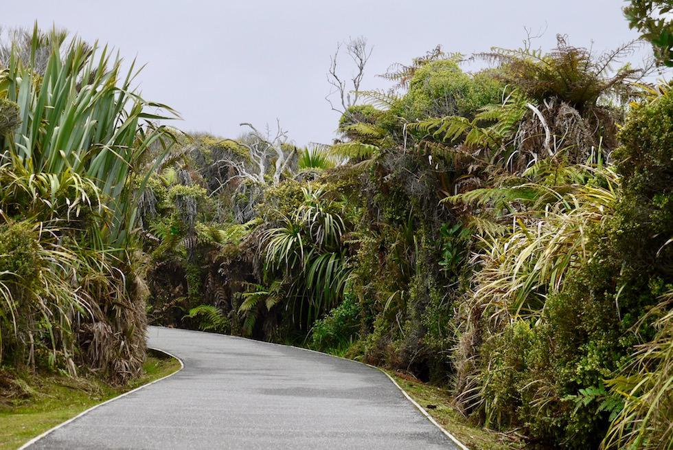 Pancake Rocks - Spazierweg - Südinsel Neuseeland