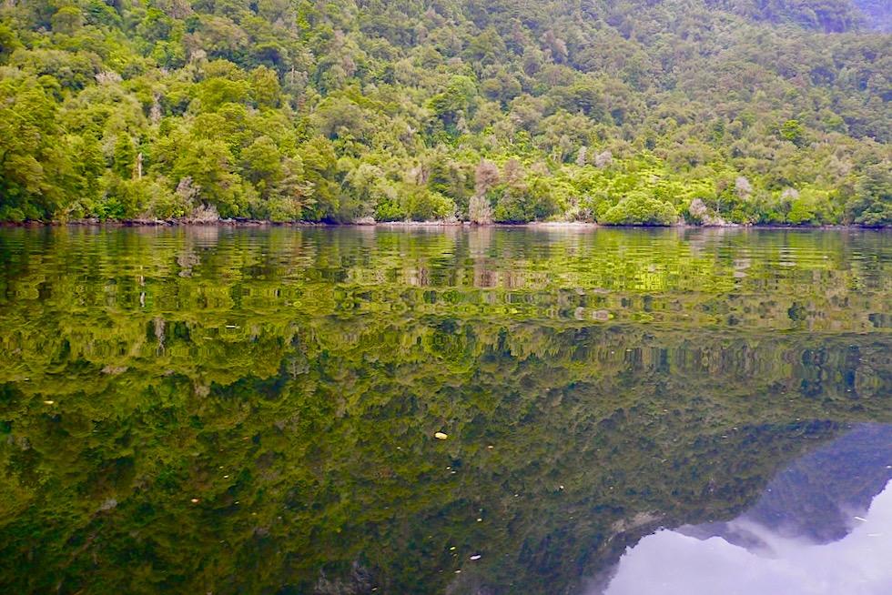 Doubtful Sound - Atemberaubend schön: Bäume spiegeln sich im Wasser - Südinsel Neuseeland