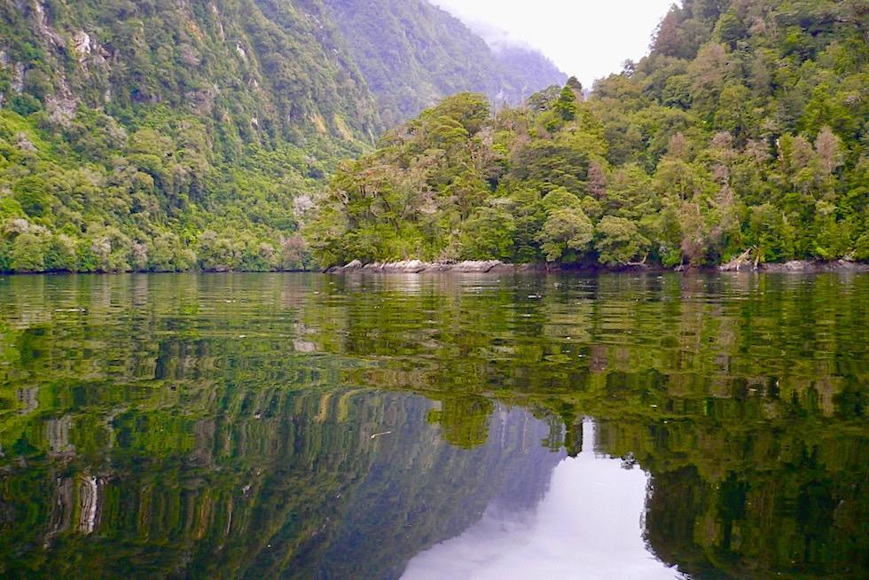 Doubtful Sound - Nebenbucht begeistert mit seinen zauberschönen Wasserspiegelungen - Neuseeland
