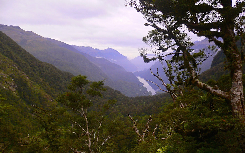 View on Doubtful Sound from Wilmot Pass