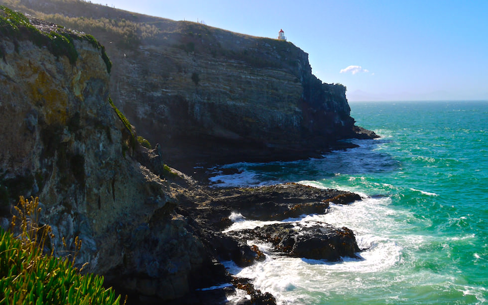 Taiaroa Heads - Albatross Colonie and Lighthouse