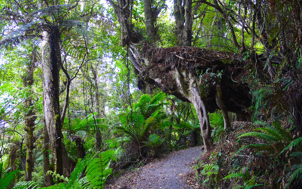 Walk to Cathedral Cave Catlins New Zealand South Island