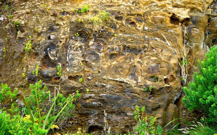 Petrified Forest Curio Bay New Zealand South Island