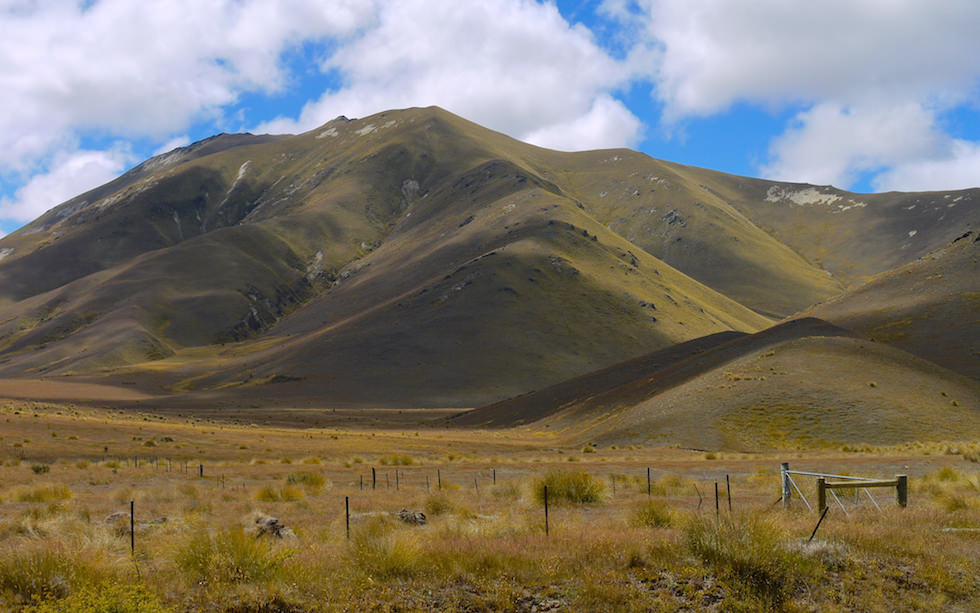 Golden Tussock Grass at Lindis Pass South Island NZ