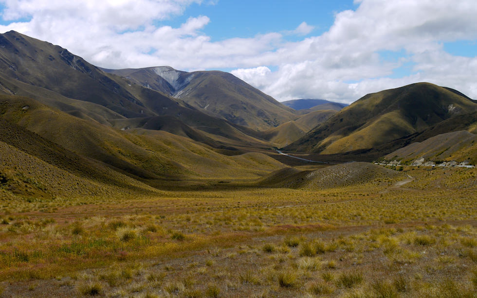 Tussock Grass at Lindis Pass South Island NZ