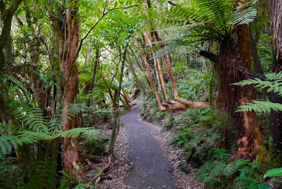 Lustige 90 Grad Bäume bei den Matai Falls - The Catlins - Neuseeland Südinsel