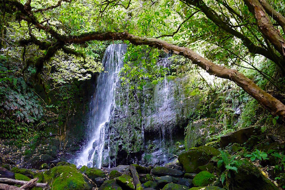 Wasserfälle der Catlins: Blick von der Plattform auf Matai Falls - The Catlins - Neuseeland Südinsel