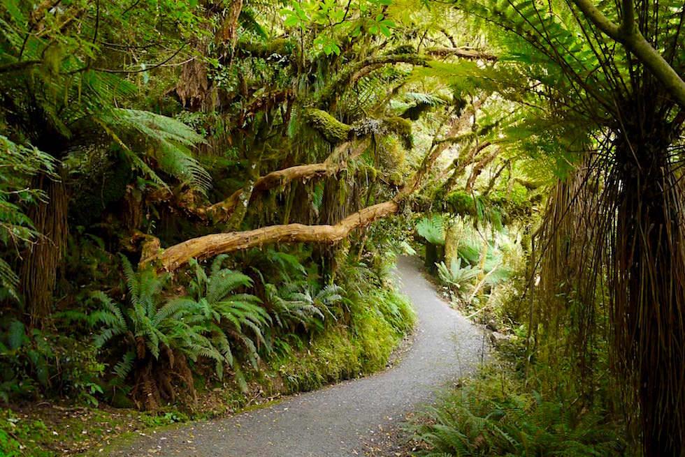Lustige 90 Grad Bäume bei den McLean Falls - The Catlins - Neuseeland Südinsel