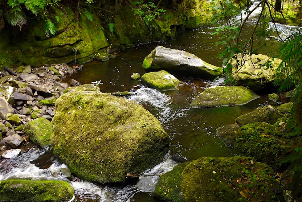 Tautuku River - McLean Falls - Neuseeland Südinsel