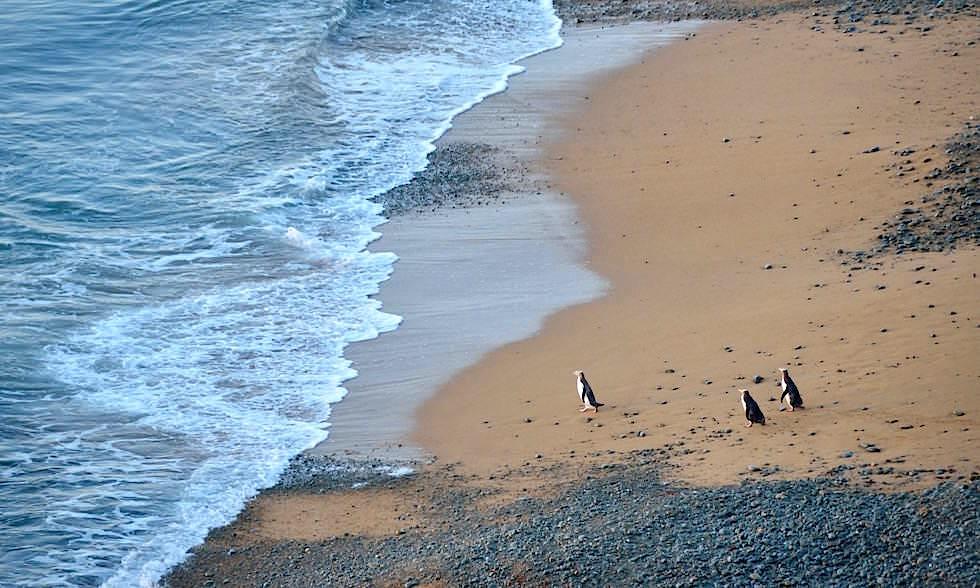 oamaru pinguine