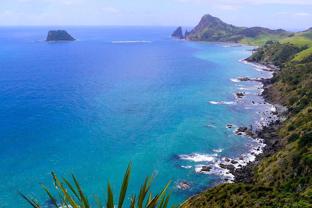 Schwindelig-schönster Ausblick auf Port Jackson Bay & die Steilküste: absolutes Coromandel Highlight & Geheimtipp - Nordinsel, Neuseeland