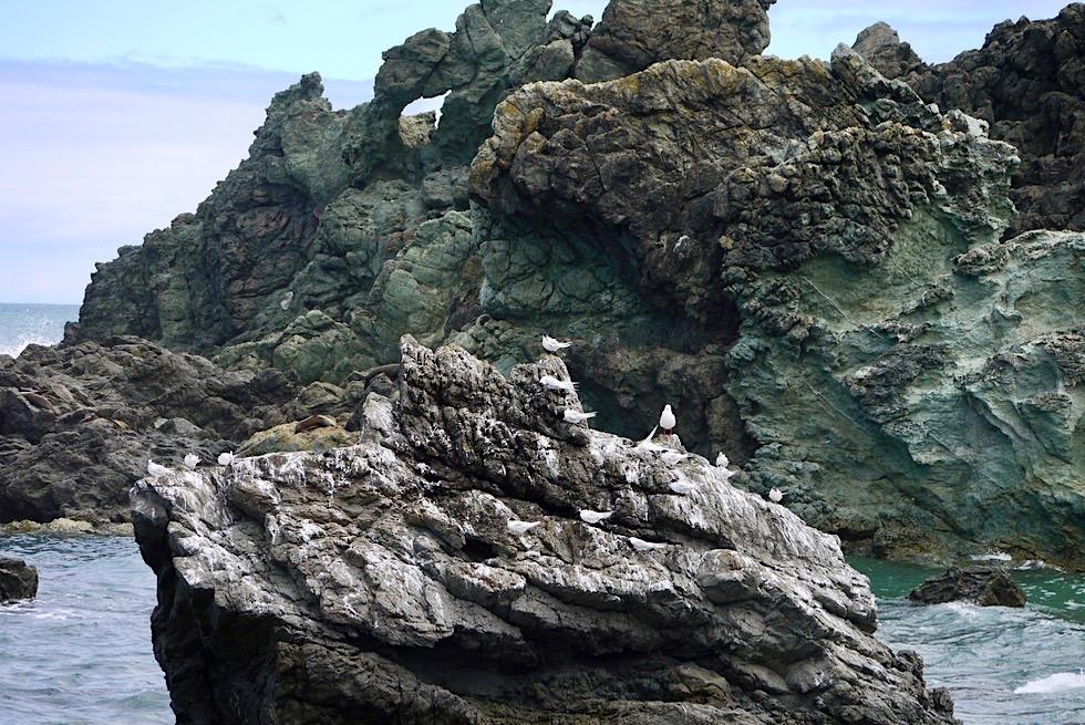Cape Palliser - Natürlicher Abenteuerspielplatz für Robben, Seevögel & touristische Beobachter - Nordinsel, Neuseeland