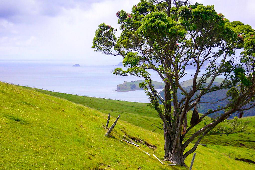 Coromandel Highlights: Faszinierender Ausblick auf die Bucht von Firth of Thames & seine kleinen Inseln - Nordinsel, Neuseeland