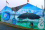Kaikoura – Wale beobachten & mit Delfinen schwimmen