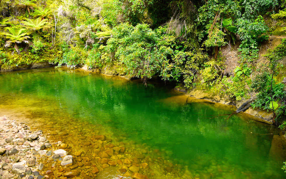 Fresh Water Holes at Abel Tasman National Park on South Island NZ