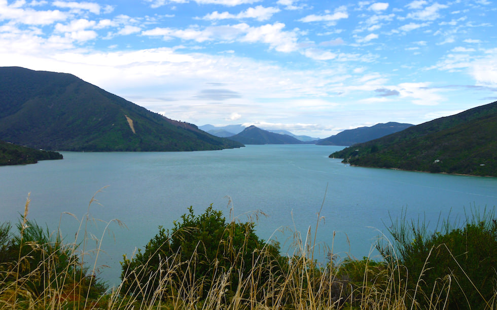 Queen Charlotte Drive between Piction and Havelock South Island NZ