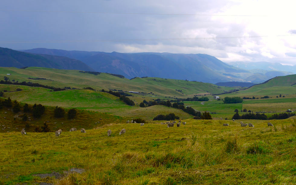 Beautiful back roads Taihape Road & Erewhon Road NZ