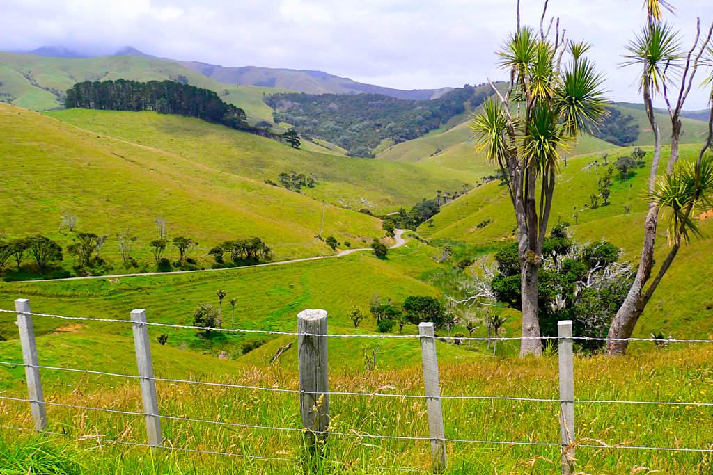 Port Jackson Road mit fantastischen Ausblicken in die Bergwelt - Definitiv eines der Coromandel Highlights - Nordinsel, Neuseeland