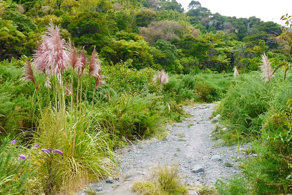 Putangirua Pinncales - toetoe oder toitoi - hochwachsende Süßgräser, die in Neuseeland endemisch sind - Nordinsel, Neuseeland