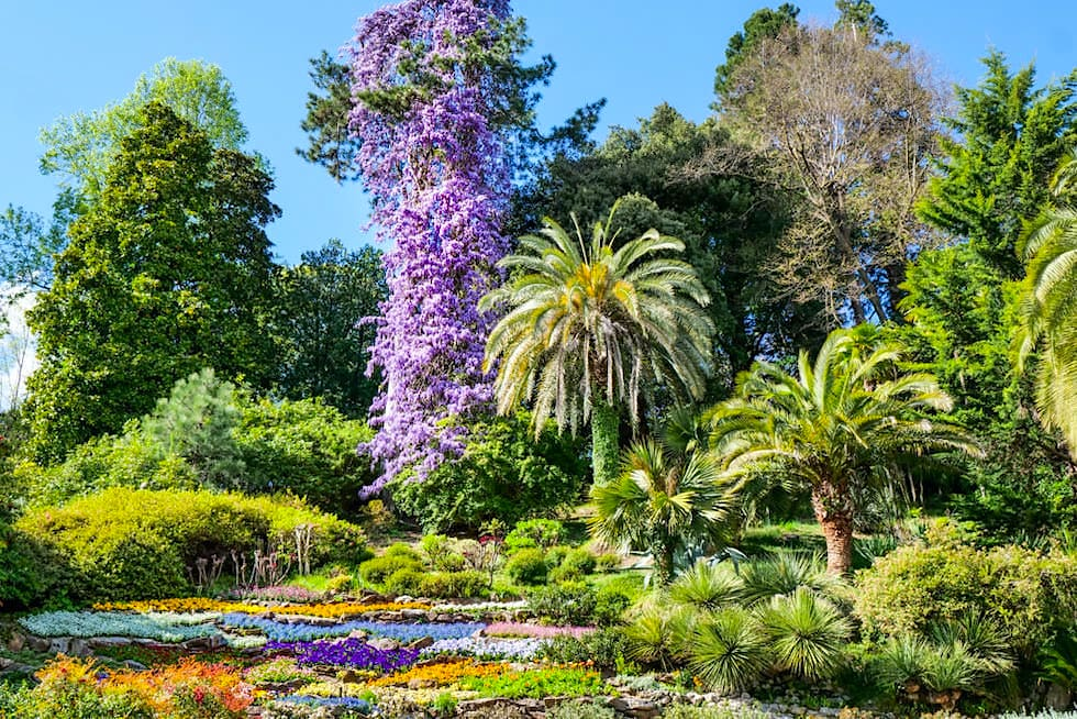 Der Garten der Villa Carlotta beeindruckt mit der schönster Blumenpracht am Comer See - Lombardei, Italien