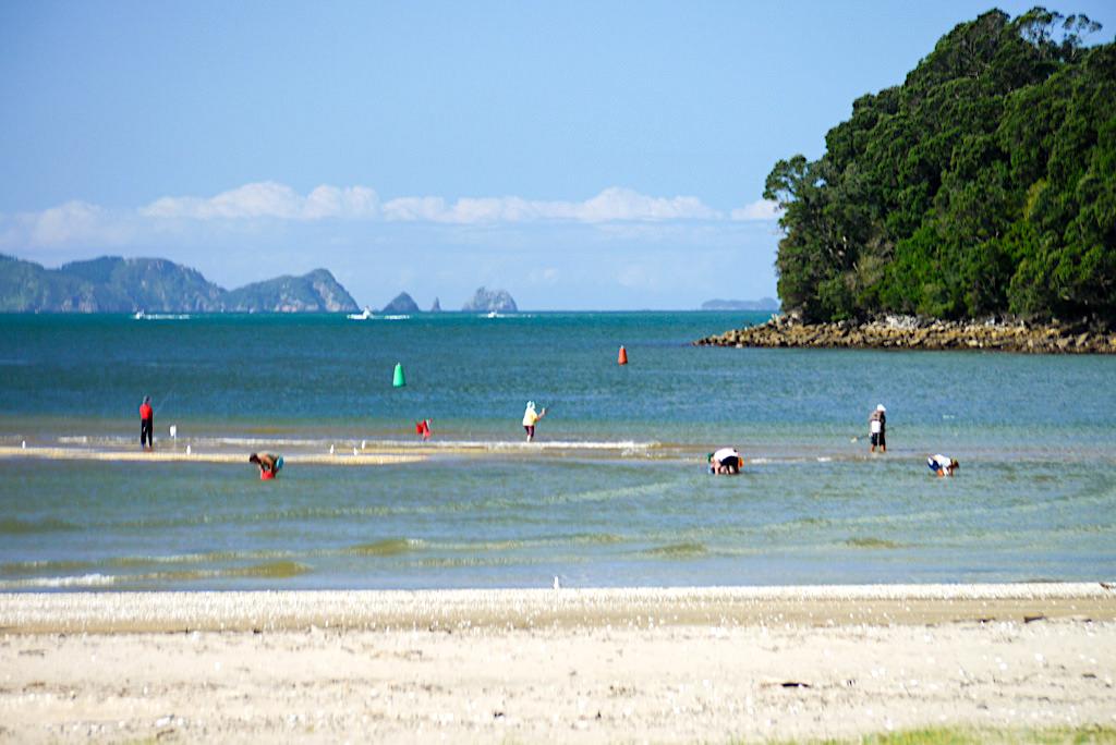 Whitianga - Fischen & Muscheln suchen - Coromandel Peninsula - Nordinsel, Neuseeland