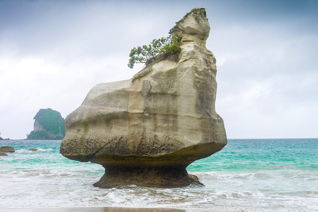 Smiling Sphinx Rock - Mare's Leg Cove & Cathedral Cove - Coromandel Highlights - Nordinsel, Neuseeland