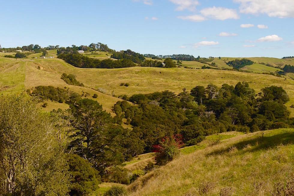 Hügellandschaft Cape Rodney - Auckland Neuseeland