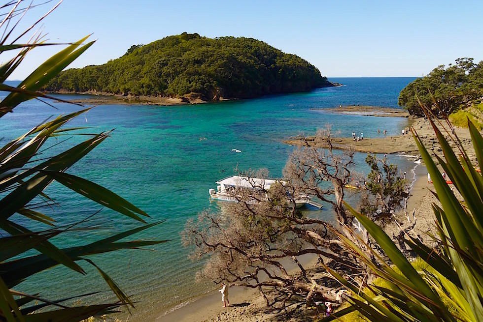 Schnorcheln bei Cape Rodney - Nordinsel - Neuseeland