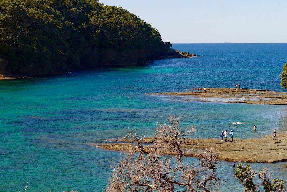Goat Island bei Leigh - Auckland Neuseeland